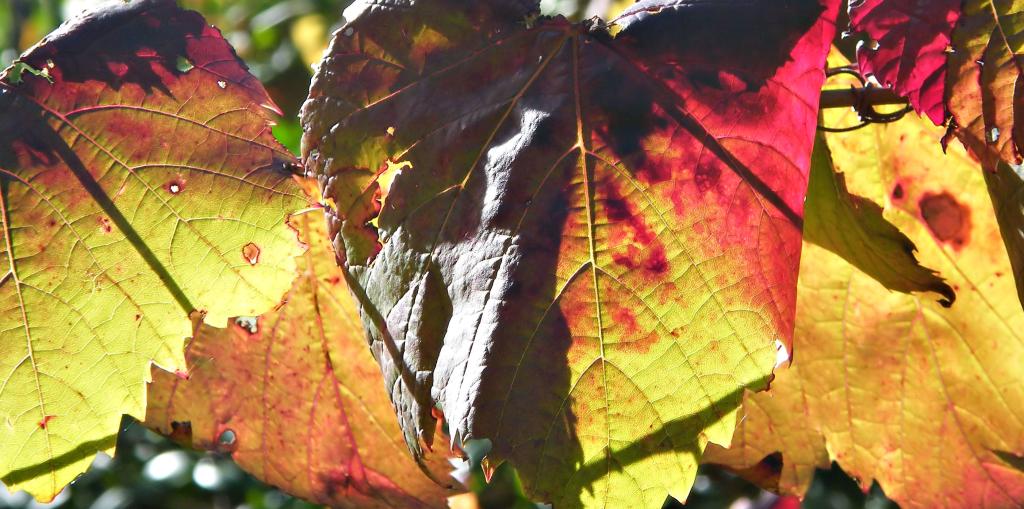 in de herfst van je leven